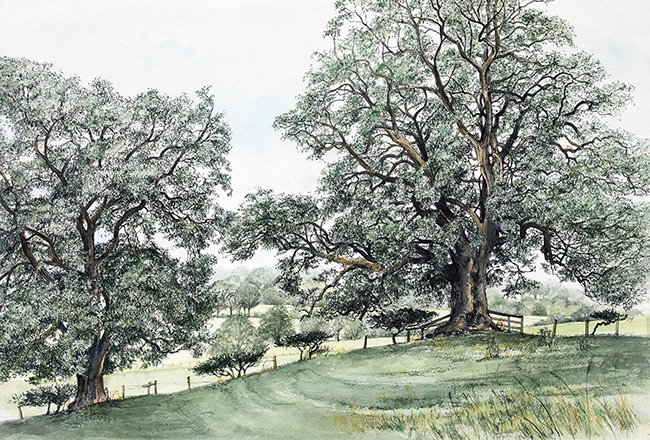 Pamela Grace - Summer Ash Trees (pen & Ink)