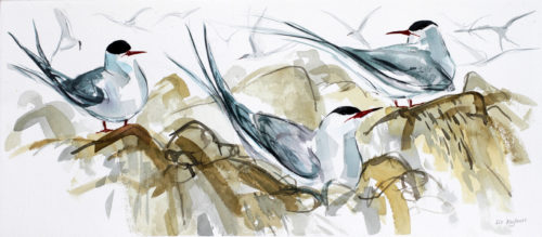 Liz Myhill. Tern Study 1