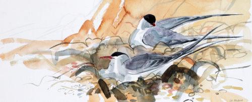 Liz Myhill. Tern Study 2