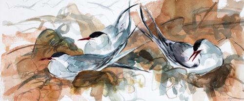 Tern Study 3
