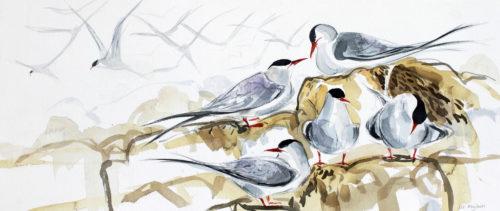 Liz Myhill. Tern Study 4