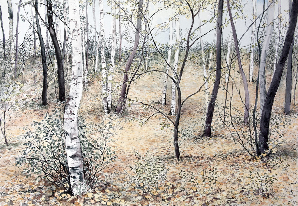 Pamela Grace. 'November Birches'
