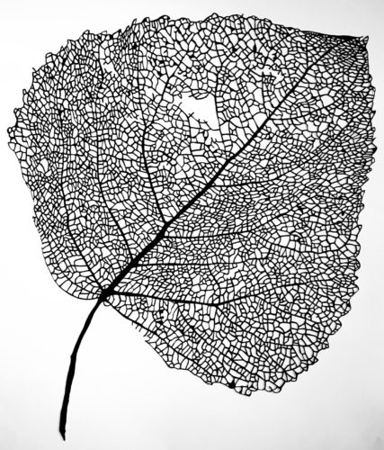 Stevi Benson. Birch Tree leaf