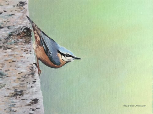 Gregory Moore. Nuthatch.