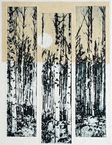 MacKenzie S M. Indigo birches