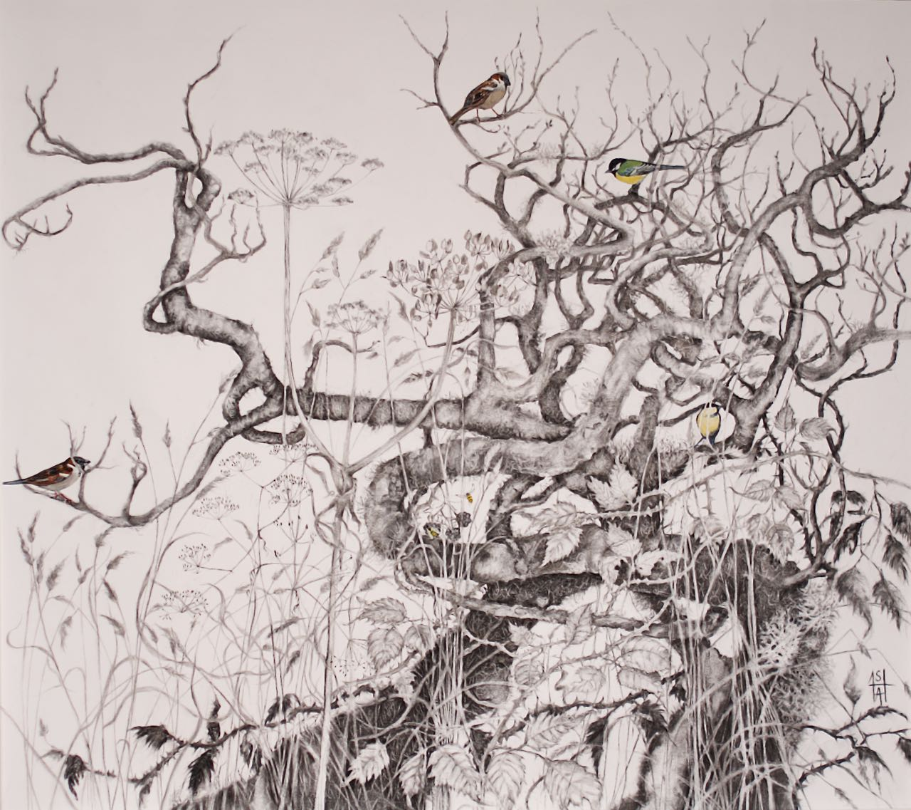 """""""Autumn Hedge Life""""Sheila Anderson Hardy H85xW95cm charcoal & watercolour on paper"""