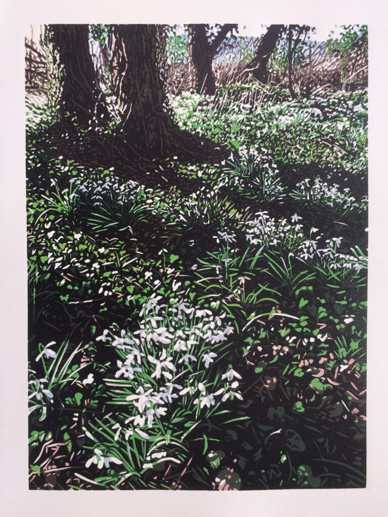 Reduciton linocut print of snowdropw in bloom in the forest in Scotland